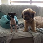 My Puppies Have An Instagram Account And Yes We Are Those Dog LadiesNow